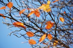 baumblätter himmel kirsten